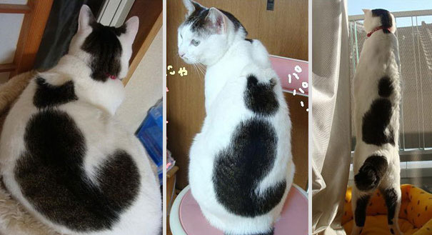 cat with a cat on its back